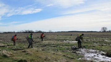 Tree planting in north and south pasture mitigation areas