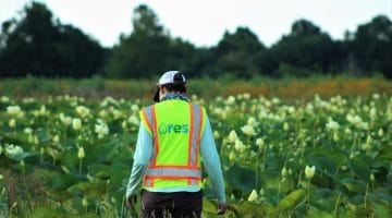 A mitigation crewmember surveys plant life at one site